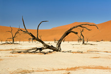 Dead Vlei Dead Tree In Salt Pan Namib-Naukluft National Park Namibia 6960
