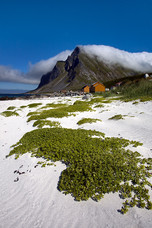 Beach Green Grass, Mountains Clouds Vikten Norway 9140